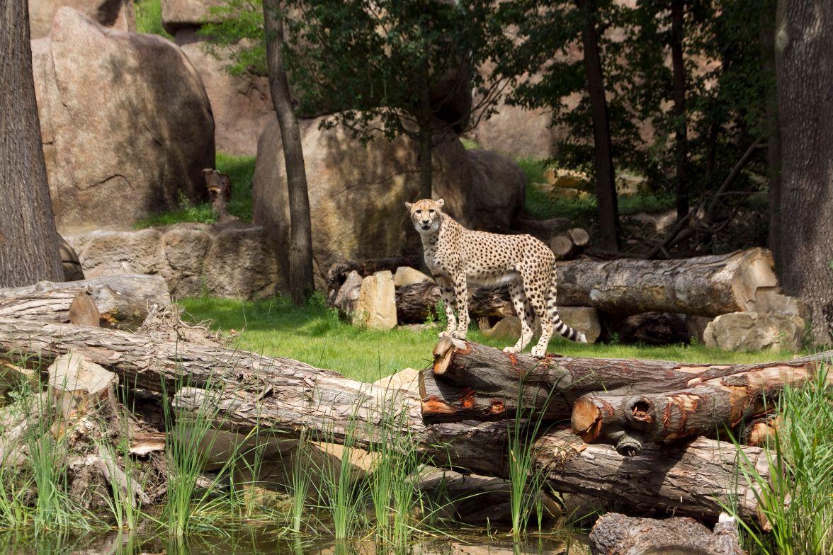 Leipzig - 2 Nächte mit Eintritt zum Zoo